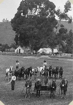 three men stand with a bunch of horses in a field; tents are seen in the background, with the rolling hills of Anderson Valley behind them.